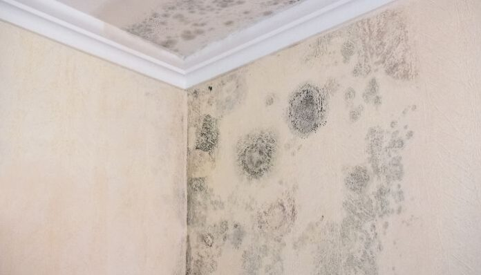 The Dangers of High Humidity in the Home