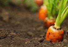 The Benefits Of Growing Your Own Food